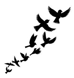 flying birds silhouettes vector image