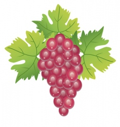 purple grape vector image