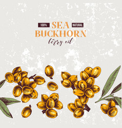 background with seamless sea buckthorn border vector image