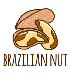 brazilian nut icon hand drawn style vector image