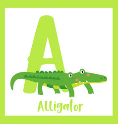 Letter a vocabulary green alligator vector