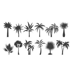 palm tree silhouette drawings vector image