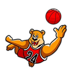 basketball bear vector image
