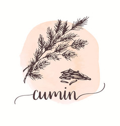 Cumin sketch on watercolor paint hand drawn ink vector