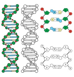 DNA - helix molecule model vector image