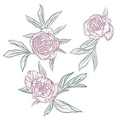 floral set peonies vector image