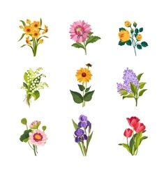 Garden flowers collection vector