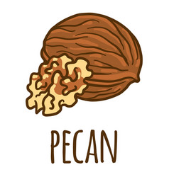 pecan icon hand drawn style vector image