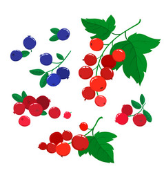 Set cartoon cranberries and blueberries vector