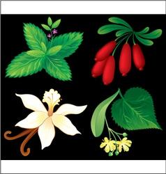 Set of aromatic plants vector