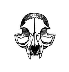 skull of a cat art vintage vector image