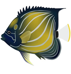 Blue ringed angelfish vector