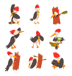 Cute woodpecker set funny bird cartoon character vector