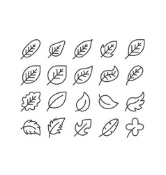 Diagonal leaf outline line icon set autumn fall vector