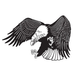 Eagle in fly black white vector