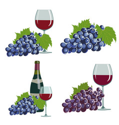 Grapes and red wine vector