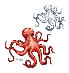 Octopus isolated sketch icon vector