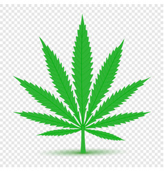 cannabis icon transparent background vector image vector image
