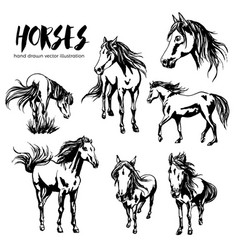 Collection seven beautiful hand-painted horses vector