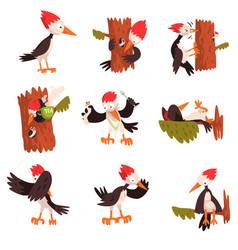 Cute funny woodpecker bird cartoon character in vector