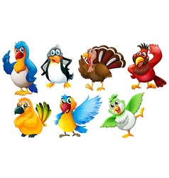Different species birds vector