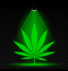 hemp leaf lamp light vector image vector image