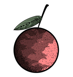isolated vintage cherry vector image