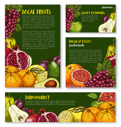 sketch fruit store banners of farm fruits vector image