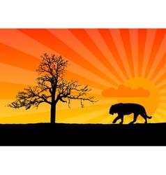 Tiger in african vector