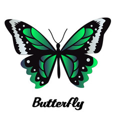 black green butterfly white background imag vector image