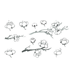 Black ink sakura blossoms vector