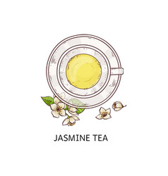 jasmine tea top view drawing - glass cup with vector image
