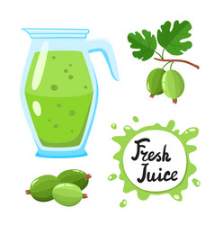 juice with gooseberry in glass jug cartoon vector image