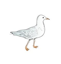 sea gull vector image vector image