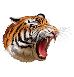 A head of a roaring tiger vector image