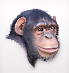 Chimpanzee head realistic vector