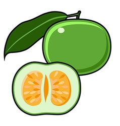 Green Grapefruit Jaffa Sweetie vector image