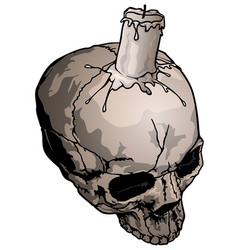 human skull with candle vector image