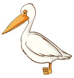 white pelican bird on background vector image