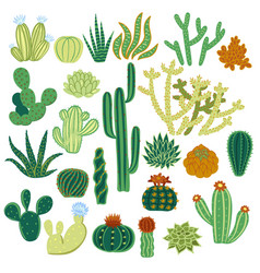 set cacti isolated on a white background vector image