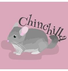 Pets Gray chinchilla domestic animals vector image vector image