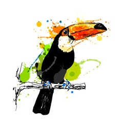 Colored hand sketch toucan vector image