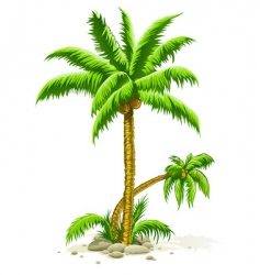 palm trees with coconut fruits vector image vector image