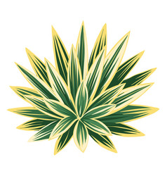 Agave and tequila decorative vector