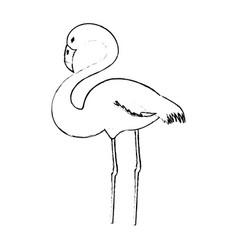 Flamingo exotic bird vector