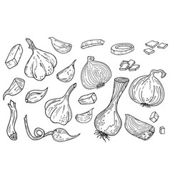 Onion and garlic hand drawn set vector
