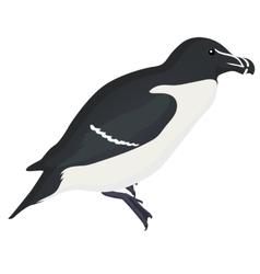 razorbill bird detalised on white background vector image