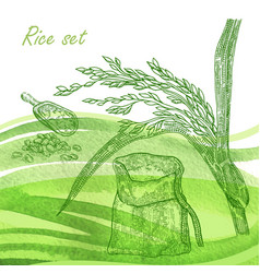 Rise set hand drawn rise plant and grain on vector