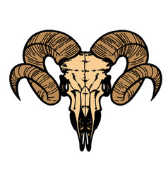 skull of a sheep horns silhouette vector image