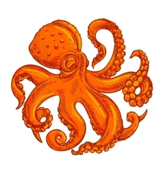 image or logo octopus on white background vector image vector image